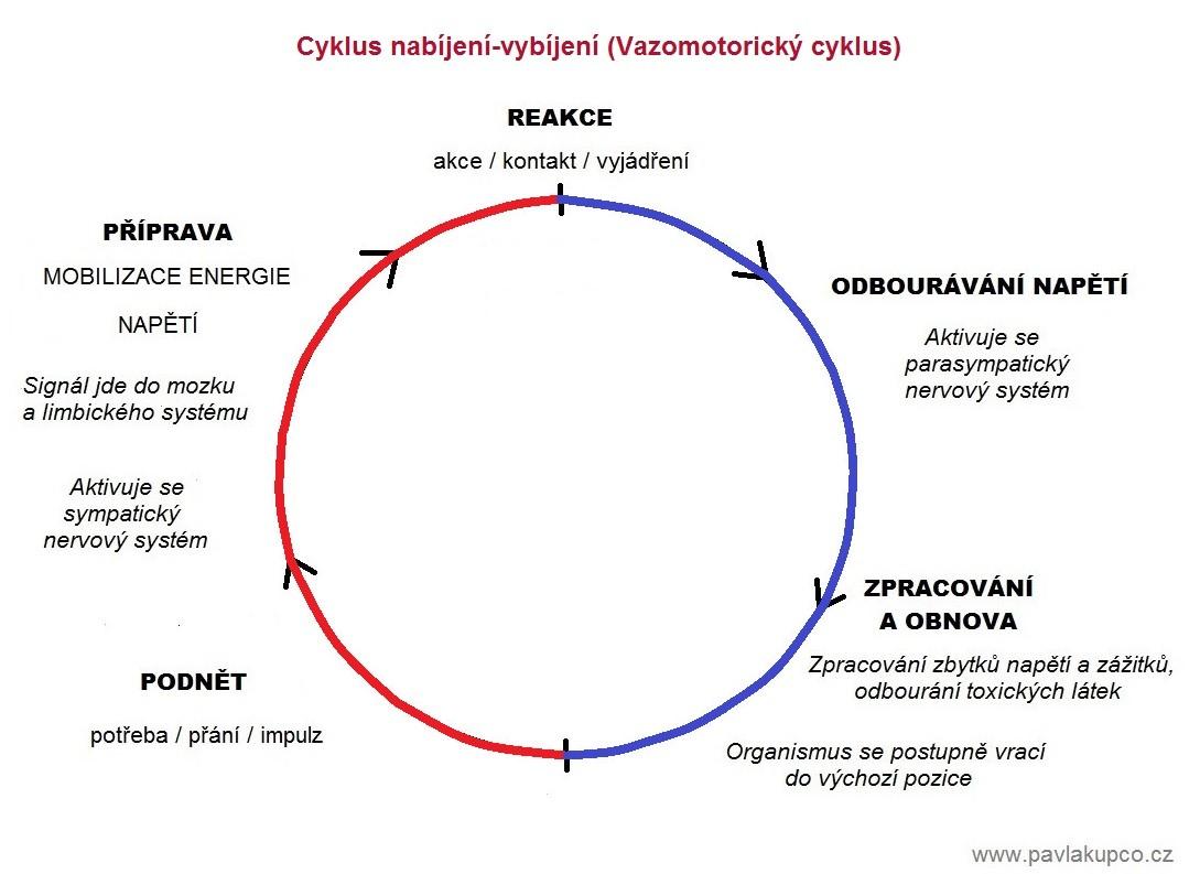 Vazomotorický cyklus komplet poslední verze s barvami